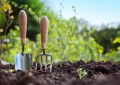 Effective tips for gardening
