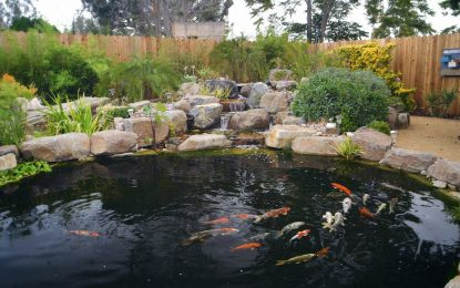 Tips for Improving Your Koi Pond