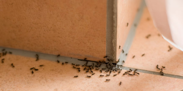Here is How to Go about Your Pest Invasion Problems in Novi