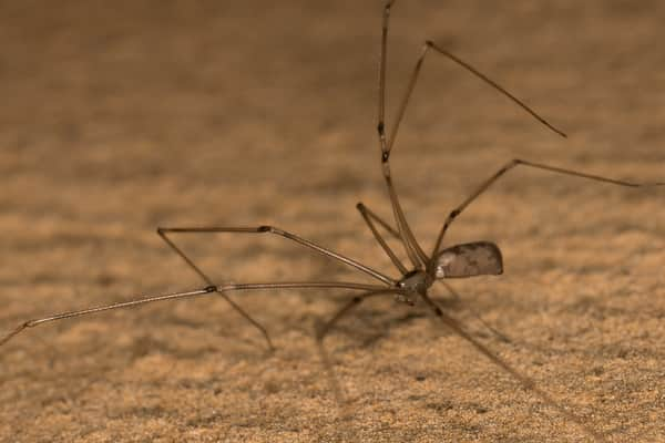 Dealing With Ants – The Six-Legged Scavengers