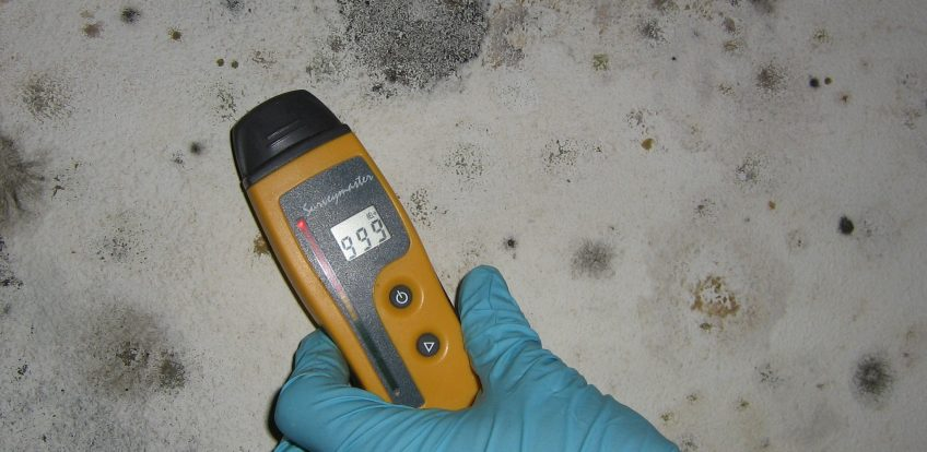 Checking for Mold in Your Home
