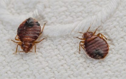 How to Get Rid of Bedbugs and Keep them From Coming Back
