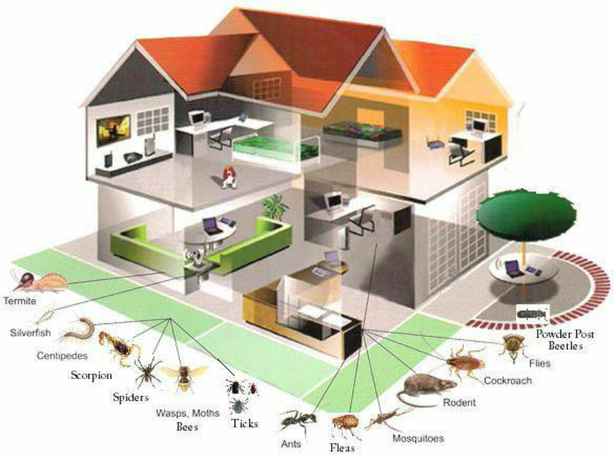 Effective Home Pest Control: why you should hire an Expert
