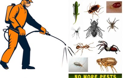 Hire a Professional or DIY Pest Control? The latter won't Work