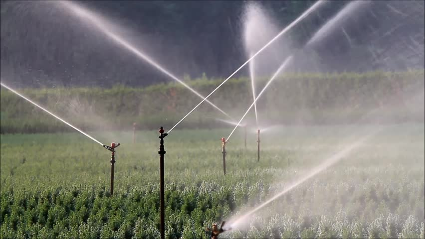 Top Benefits of a Denver Sprinkler System