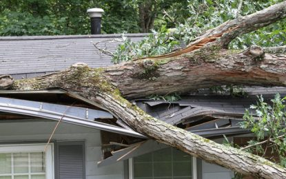 What To Do if You Tree Damage to Your Roof